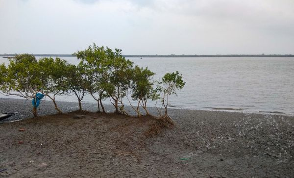 Sundarbans: Not a blade of grass grew